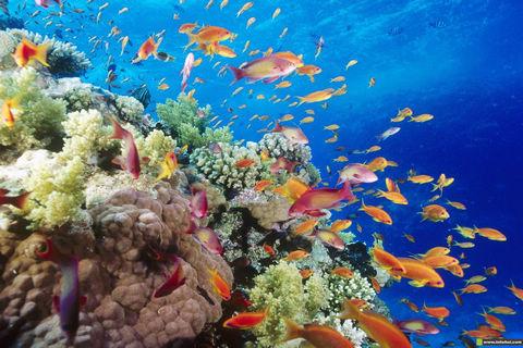 海洋世界动态壁纸2