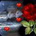 Valentines Sea LWP
