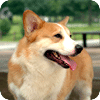 Lively dog wallpaper