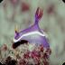 海蛞蝓图片