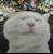 可爱的猫叔图片集