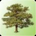 TreeDataSender