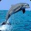 海洋动物名片