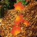 秋天壁纸 Autumn Live Wallpaper