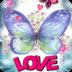 紫蝴蝶的爱情生活沃尔玛 Purple Butterfly Love Live Wal