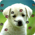 Puppy Live Wallpaper 2