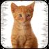 猫叫声模拟器