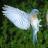 精美鸟类图片
