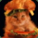 猫的饮食计算器