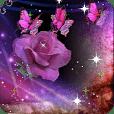 紫蝴蝶玫瑰即时沃尔玛