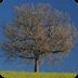 二维动画片树的