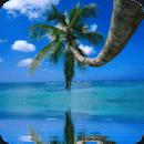 Tropical Palm And Sea Live Wal