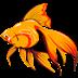 Aquarium Tools