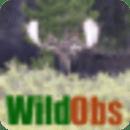 移动WildObs
