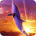 Dolphin Sunrise Free