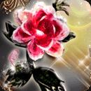 A1 -王子的玫瑰