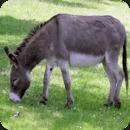 驴的声音恶作剧