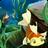 fish puzzle: preschool
