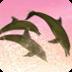 海豚的太阳动态壁纸