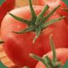 西红柿治病功效