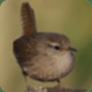 鸟类地图集录制软件