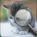 可爱猫找茬