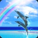 Dolphin Beats Free