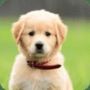 可爱的小狗狗