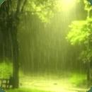 Rain In Green