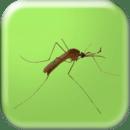 蚊子的声音 - 3D -