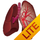 Ausculta Pulmonar Lite
