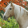 Horse Breeds Gallery