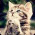 超可爱的萌猫咪