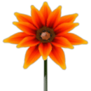 Pakistan flower 3D wallpaper