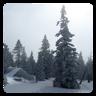 冬季雪天壁纸