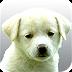 保加利亚狗狗