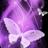 闪闪发光的蝴蝶