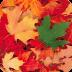 秋季现场壁纸