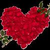 百花系列之999朵玫瑰