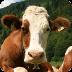 动物园:农场动物