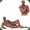 解剖肌肉的。