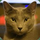 猫计算器[有用的]