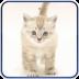Tenderly White Kitten