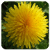 Wild Alaska Flowers