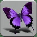 3D Beautiful Butterfly