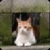 可爱猫咪盒子V3