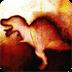 恐龙陨石坑