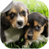 Cute Puppy Wallpapers