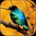 3D清晨鸟鸣声
