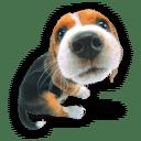 狗狗百科图鉴